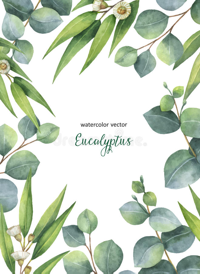 Watercolor vector green floral card with eucalyptus leaves and branches on white background. vector illustration