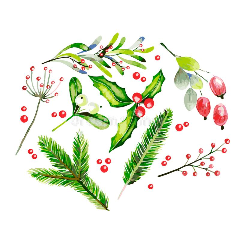 Watercolor vector illustration. Fir brancges, mistletoe, holly jolly, dor rose and guelder rose twig and berries stock illustration