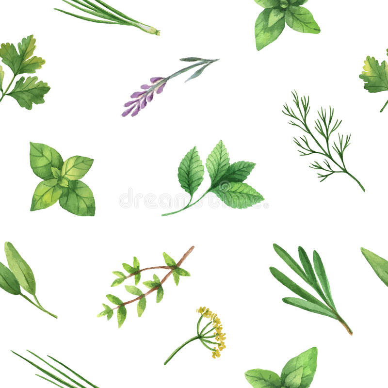 Watercolor vector seamless pattern hand drawn herb . stock illustration