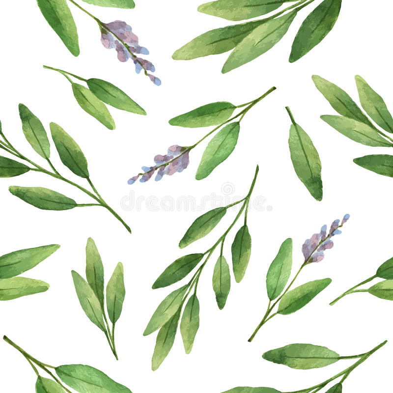Watercolor vector seamless pattern hand drawn herb sage . Watercolor leaves and branches of sage on a white background. Herbs for packaging design, cards royalty free illustration