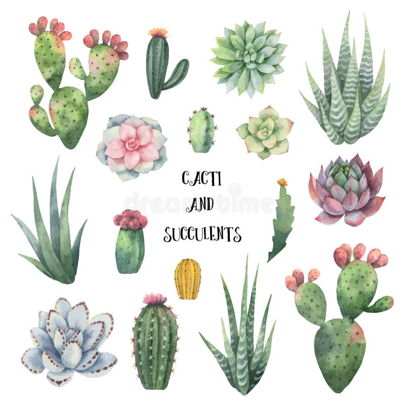 Watercolor vector set of cacti and succulent plants isolated on white background. Flower illustration for your projects, greeting cards and invitations royalty free illustration