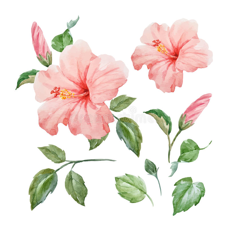 Download Watercolor Vector Tropical Hibiscus Flower Stock
