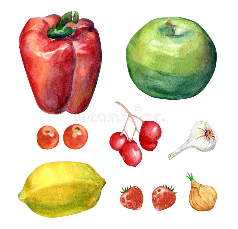 Watercolor Vegetables and Fruits Set stock photos