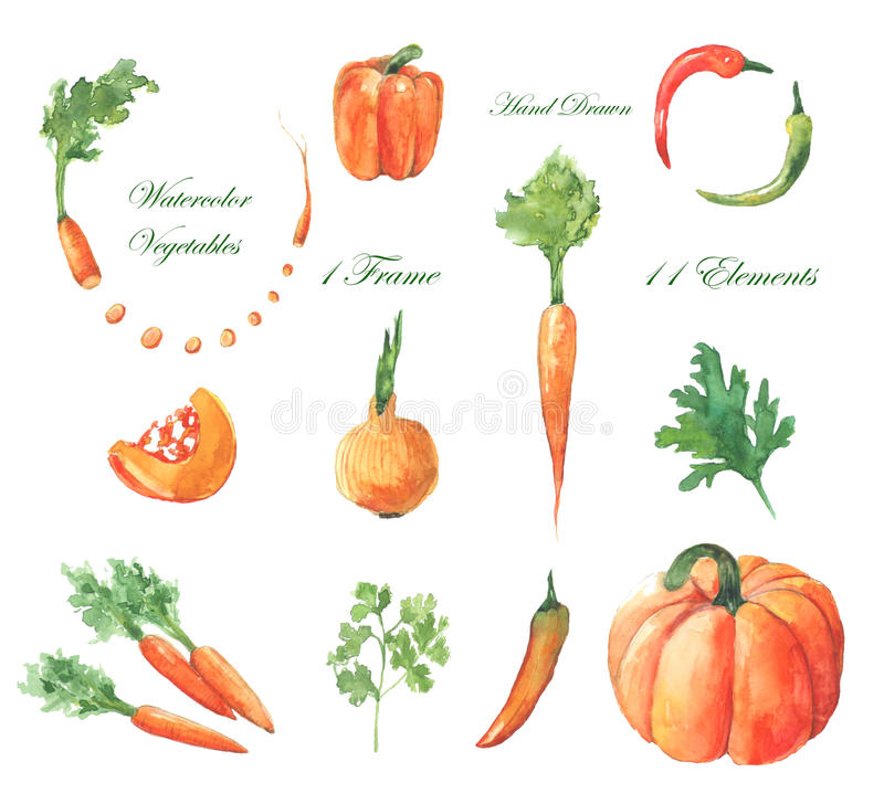 Watercolor vegetables royalty free illustration