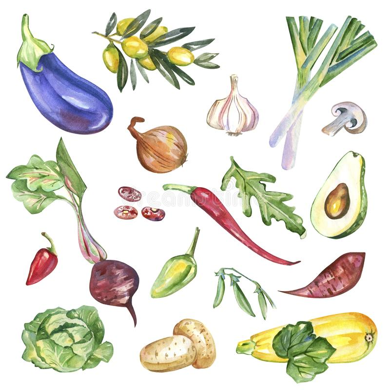 Watercolor vegetables isolated on white background pattern vector illustration