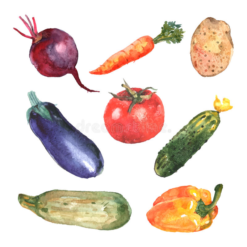 Watercolor Vegetables Set. With carrot zucchini beet cucumber potato isolated vector illustration vector illustration