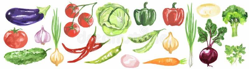 Watercolor vegetables set. vector illustration