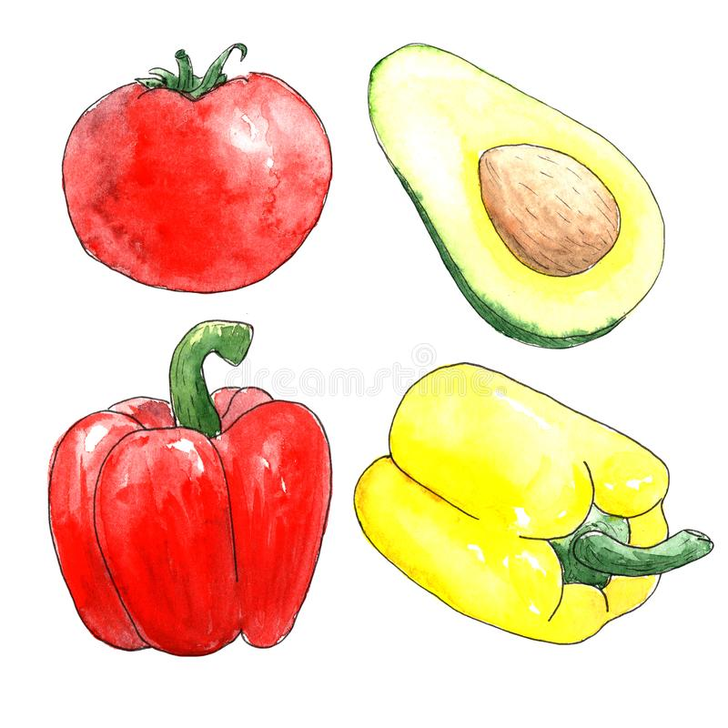Watercolor vegetables on white background. a sketch of a tomato, Bulgarian red and yellow peppers and avocado royalty free stock photography