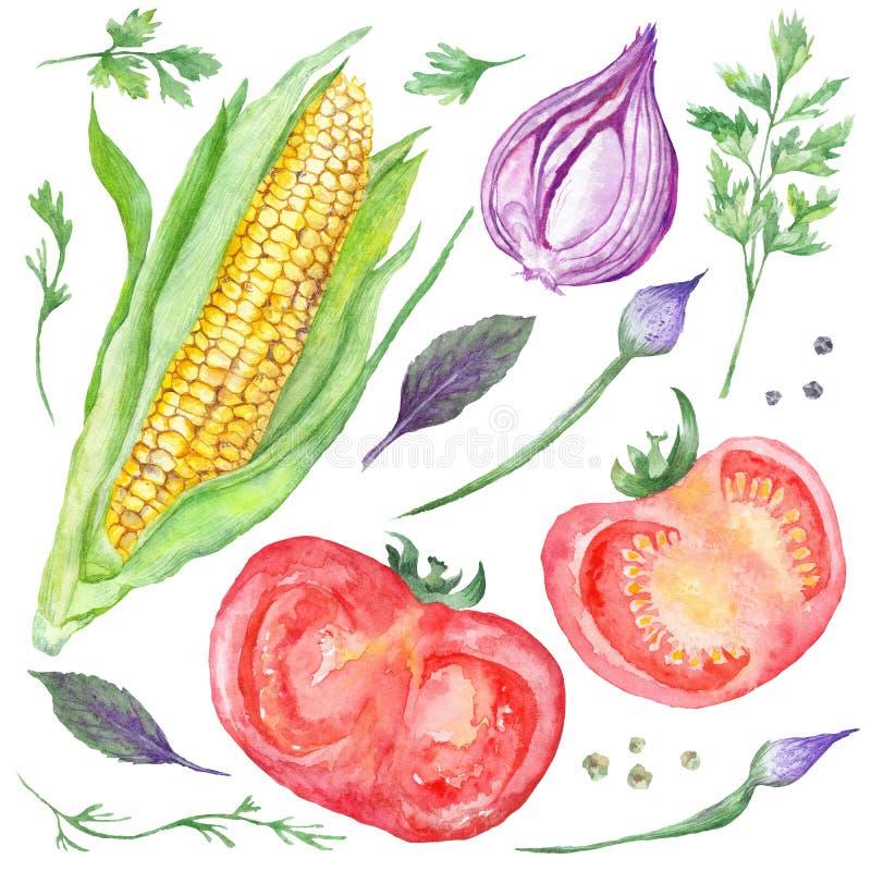 Watercolor Vegetarian Food royalty free illustration