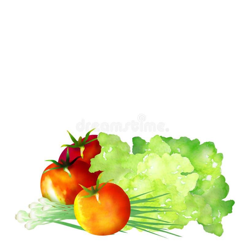 Watercolor veggies vector illustration