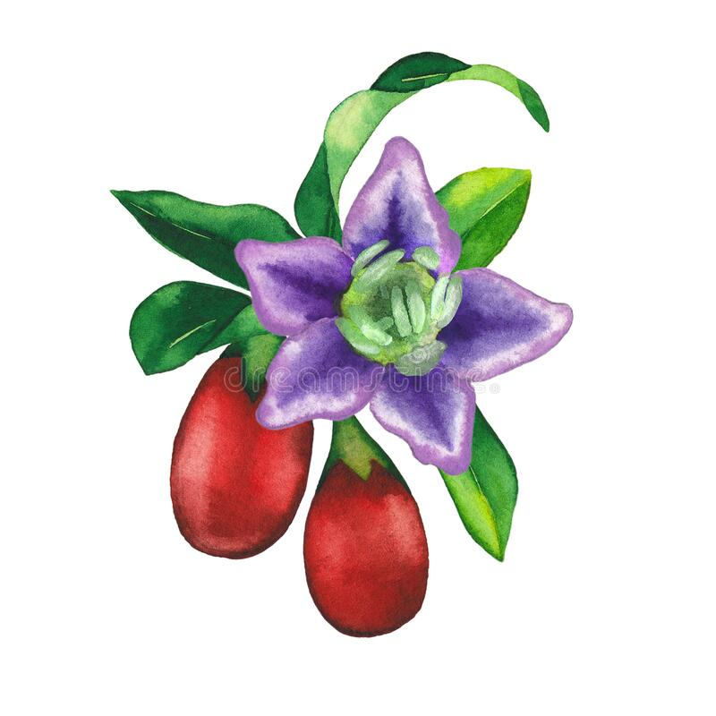 Watercolor Vignette Made Of Goji Berries Flowers And Leaves