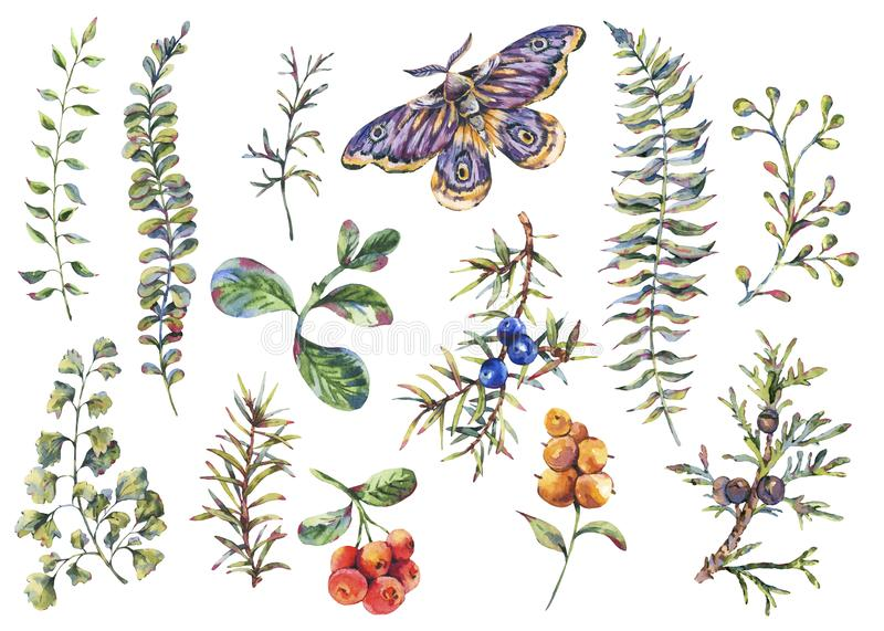 Watercolor vintage floral forest set of fir branches, berries, moth, flowers and fern. Natural elements isolated on white background, design objects royalty free illustration