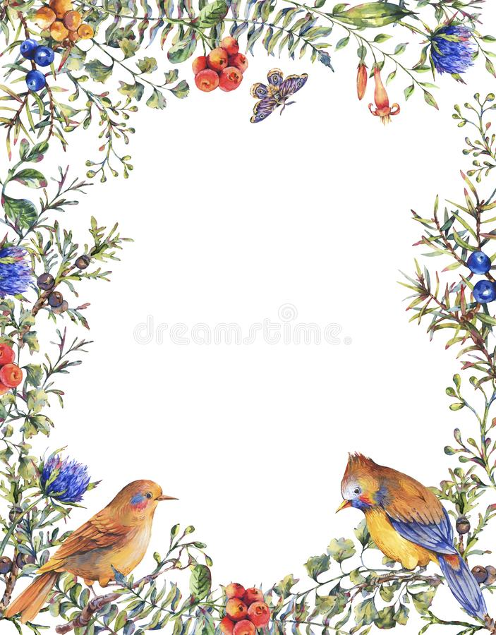 Watercolor vintage floral forest vertical frame with pair of birds, fir branches, berries, moth, flowers and branches vector illustration