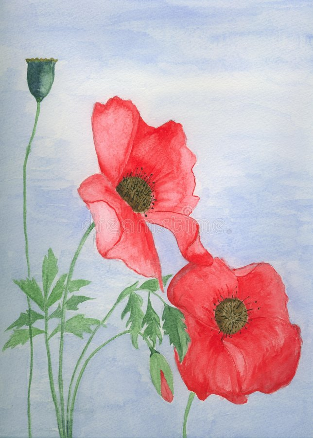 Traditional watercolor , watercolour painting of Red poppies royalty free illustration