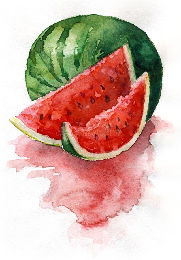 Watercolor watermelon stock illustration