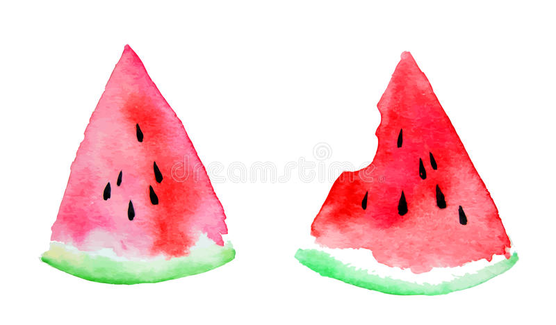 Watercolor of watermelon vector illustration