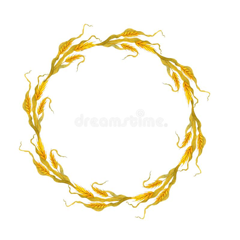 Watercolor wheat wreath. Woven golden spikelets royalty free illustration