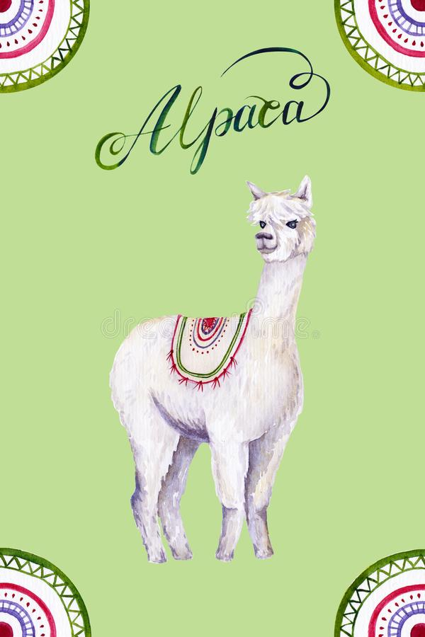 Watercolor white alpaca, calligraphic inscription and ornament. Colorful illustration isolated on green. Hand painted animal. Perfect for kids poster, wallpaper stock illustration