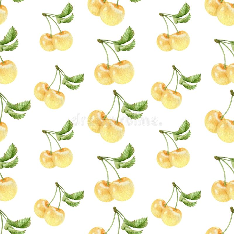 Watercolor white cherries seamless pattern royalty free stock image