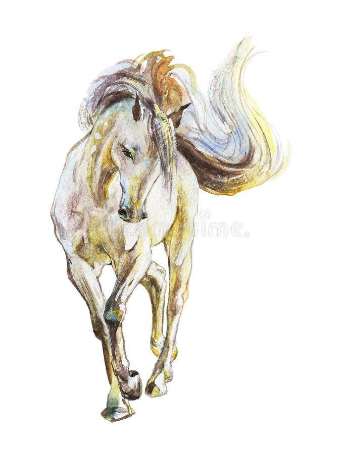 Watercolor white horse. Hand drawn beautiful arabian, mustang, thoroughbred stallion on white background. Painting animal illustration royalty free illustration