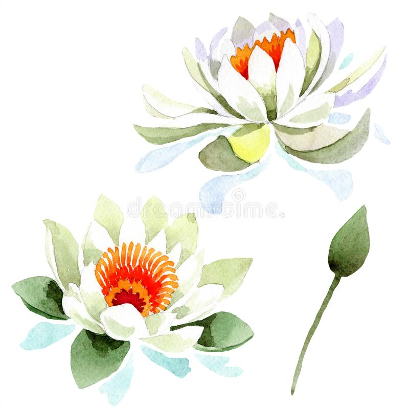 Watercolor white lotus flower. Floral botanical flower. Isolated illustration element. Aquarelle wildflower for background, texture, wrapper pattern, frame or royalty free illustration
