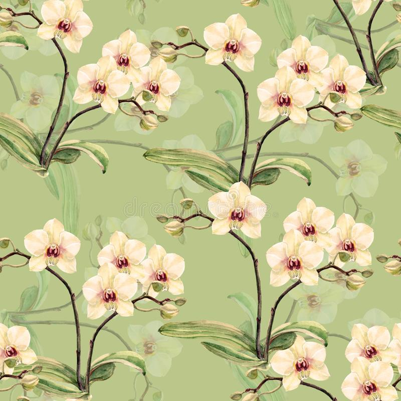 Free Watercolor White Orchid On A Limepeel Background.Handiwork Seamless Pattern. Royalty Free Stock Images - 114236159