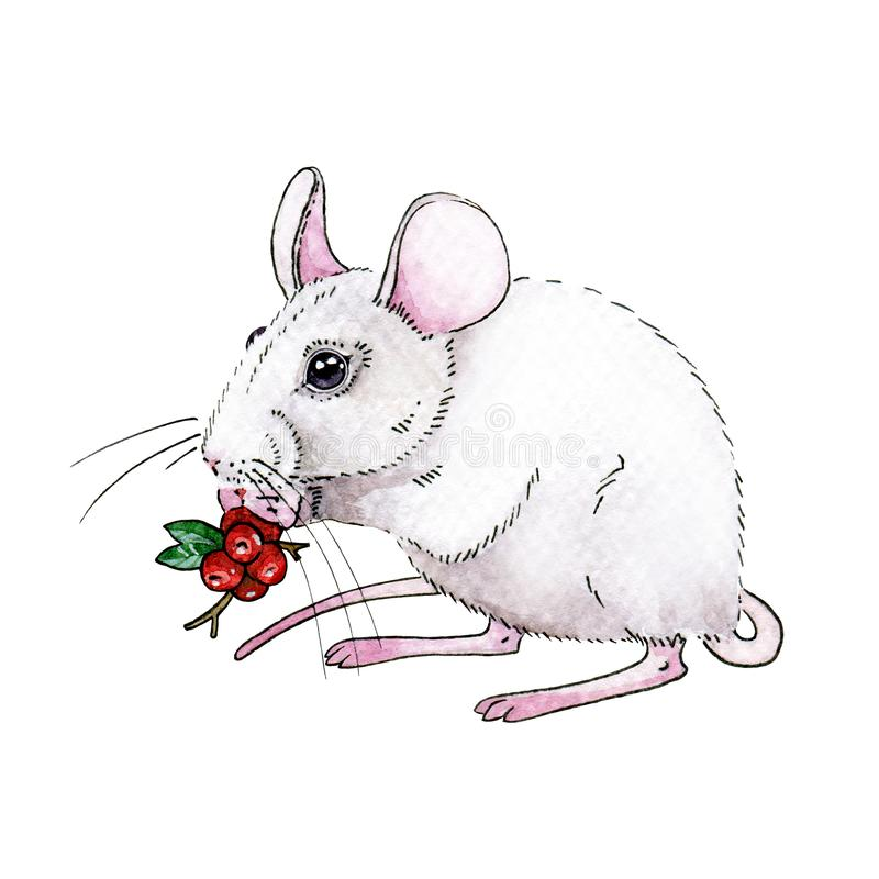 Watercolor white rat or mouse illustration with nice red christmas berries. Cute little mouse a simbol of chinese 2020 new year vector illustration