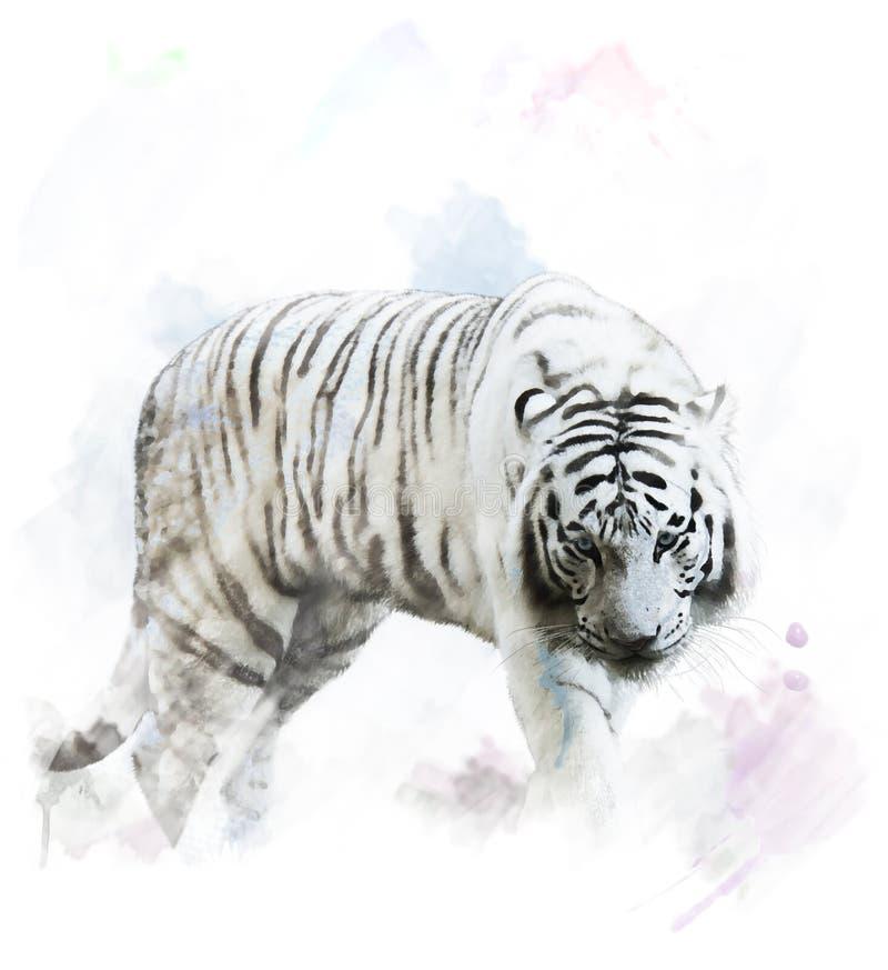Watercolor White Tiger Portrait vector illustration
