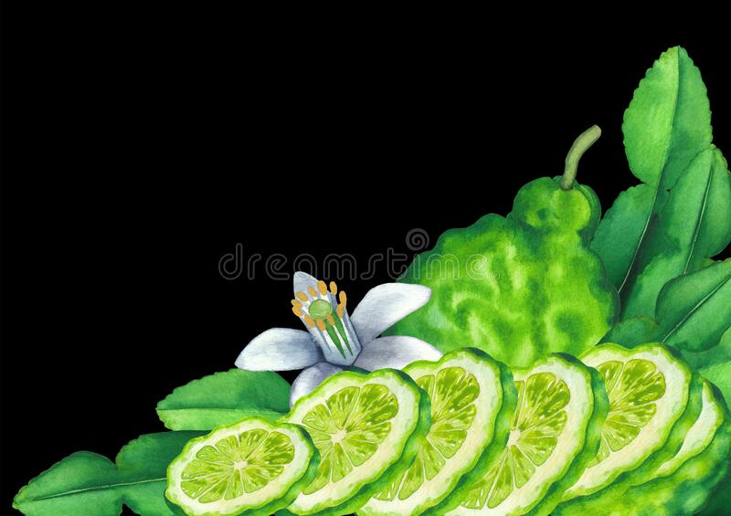 Watercolor whole and sliced bergamot fruits, leaves and flower royalty free stock photos