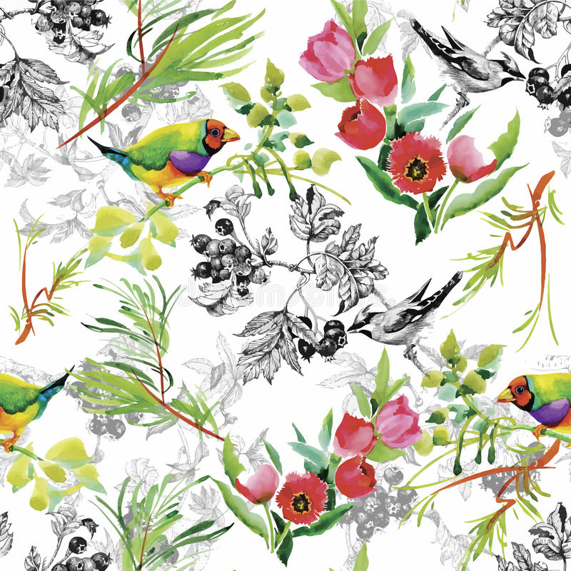 Watercolor Wild exotic birds on flowers seamless pattern on white background.  royalty free illustration