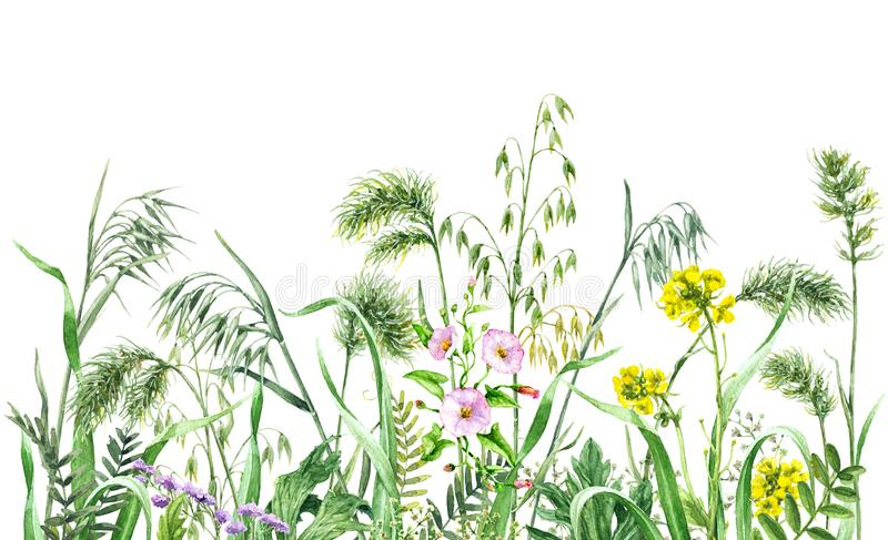 Watercolor wild flowers border royalty free illustration