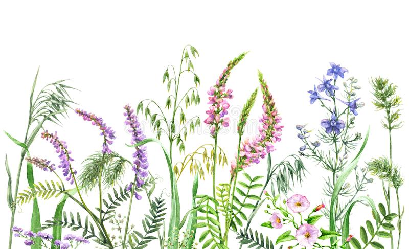 Watercolor wild flowers border vector illustration