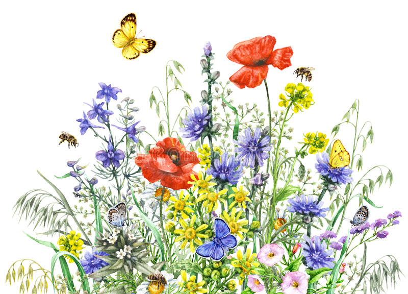 Watercolor wild flowers and insects stock illustration