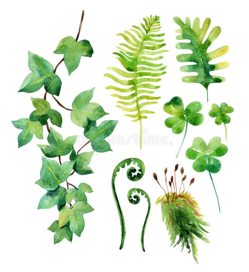 Watercolor wild leaves set isolated on white background. vector illustration