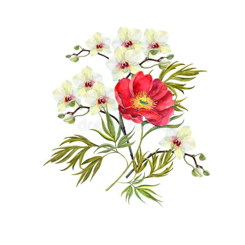 Watercolor wild peony with orchid on white background. royalty free illustration
