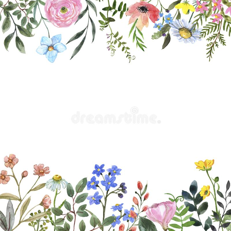 Free Watercolor Wildflower Frame On White Background. Beautiful Summer Meadow Flowers Border Stock Images - 172221624