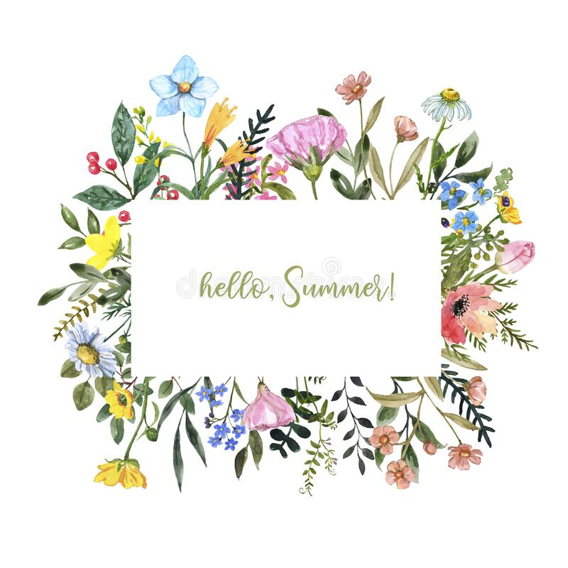 Free Watercolor Wildflower Frame On White Background. Beautiful Summer Meadow Flowers Border, Botanical Backdrop For Cards, Invitations Royalty Free Stock Photography - 174590327