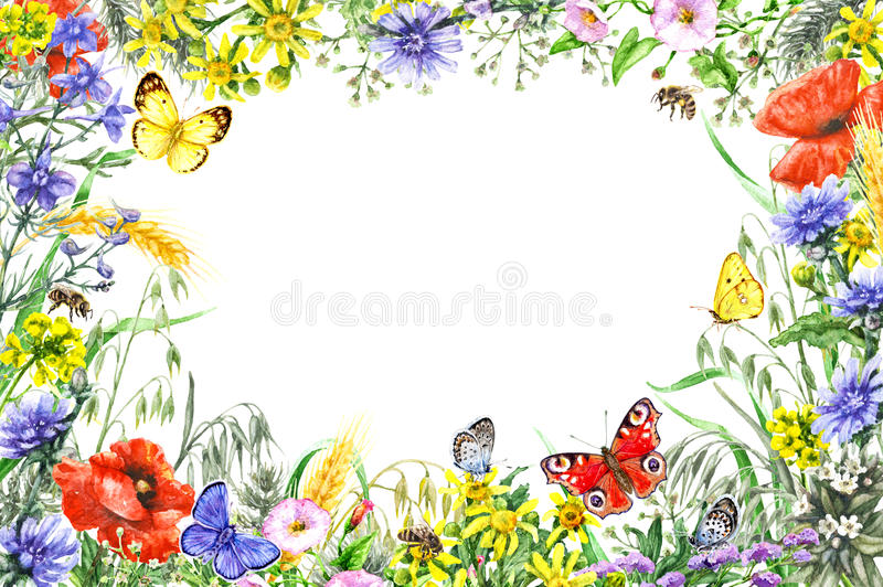 Watercolor wildflowers frame vector illustration