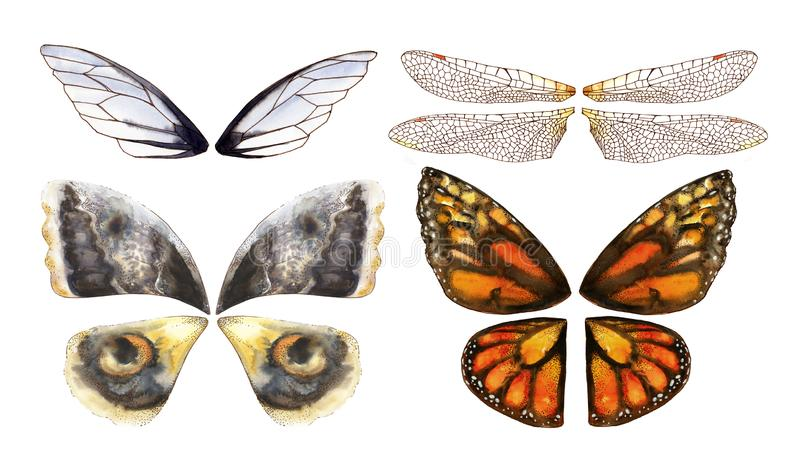Watercolor wings of butterflies and moths stock photo