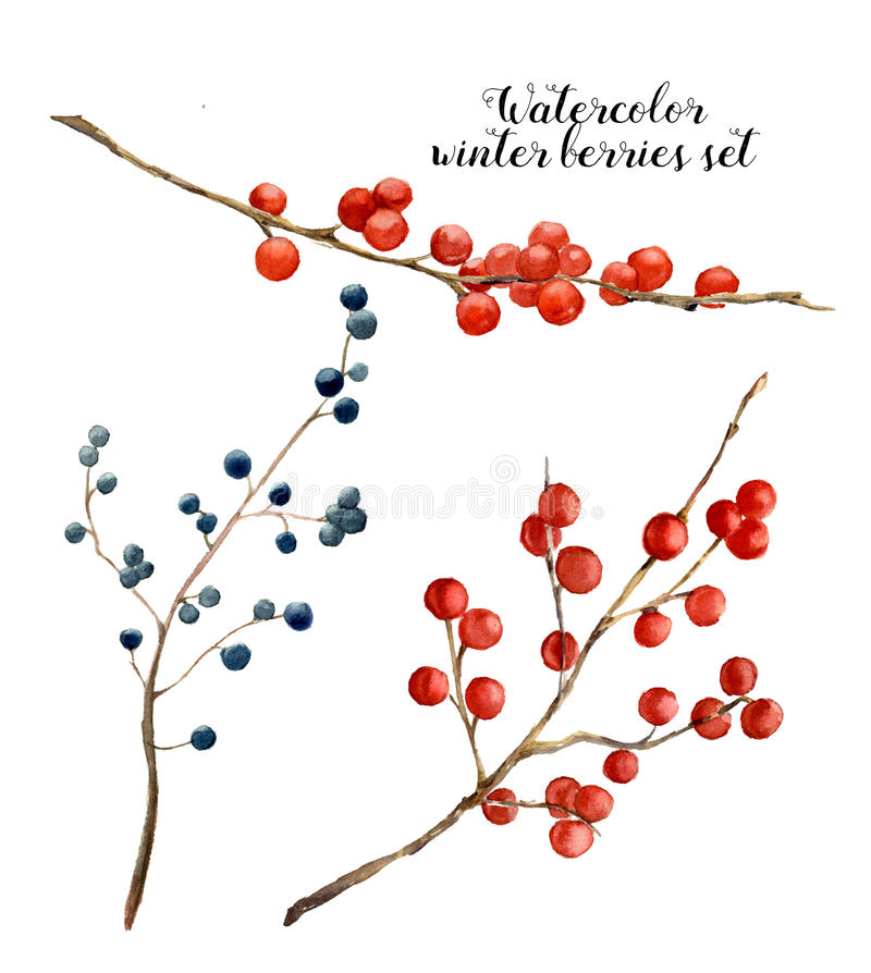 Watercolor winter berries set. Hand painted red and blue winter berries and branches on white background. Botanical royalty free illustration