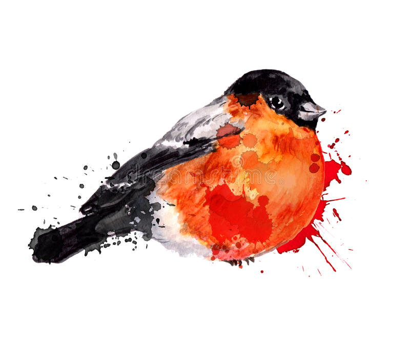 Watercolor winter bird - bullfinch. With blots in artistic style vector illustration