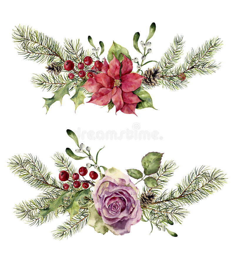 Watercolor winter floral elements isolated on white background. Vintage style set with christmas tree branches, rose stock illustration