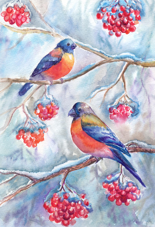 Watercolor winter picture with bullfinches, sitting on branches stock illustration