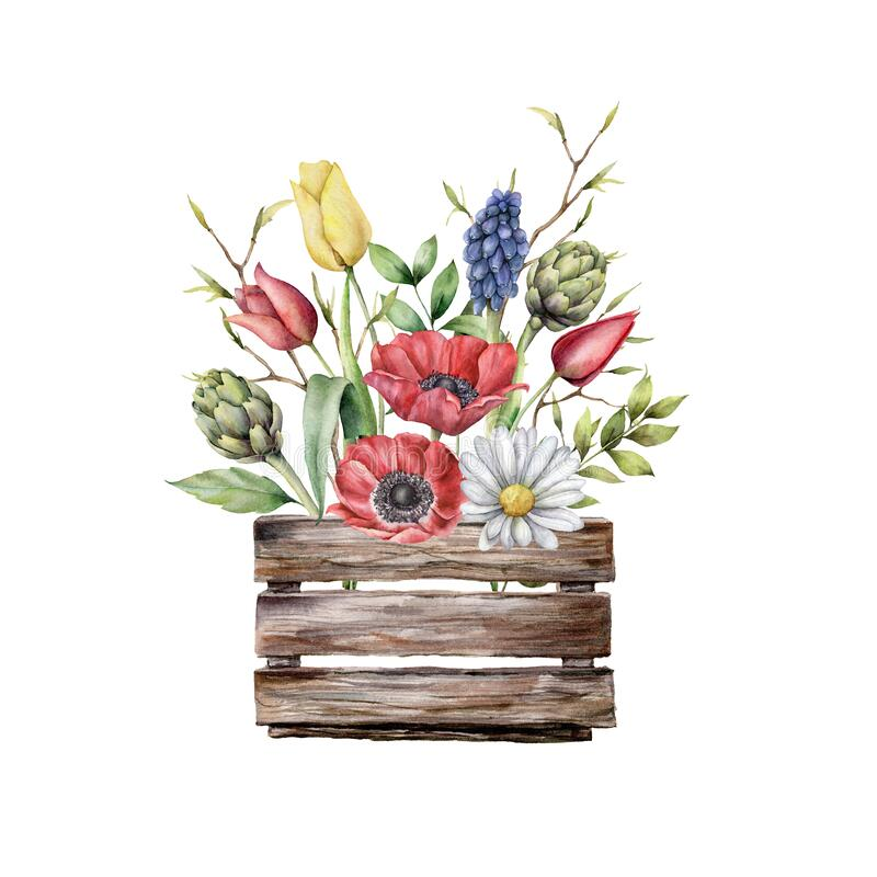 Watercolor wooden box with spring flowers. Hand painted anemones, chamomile, tulips, hyacinths, artichokes isolated on royalty free stock images