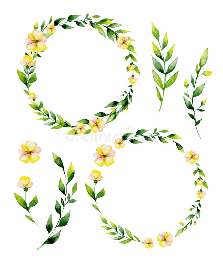 Watercolor yellow flower and herbs circle set. stock illustration