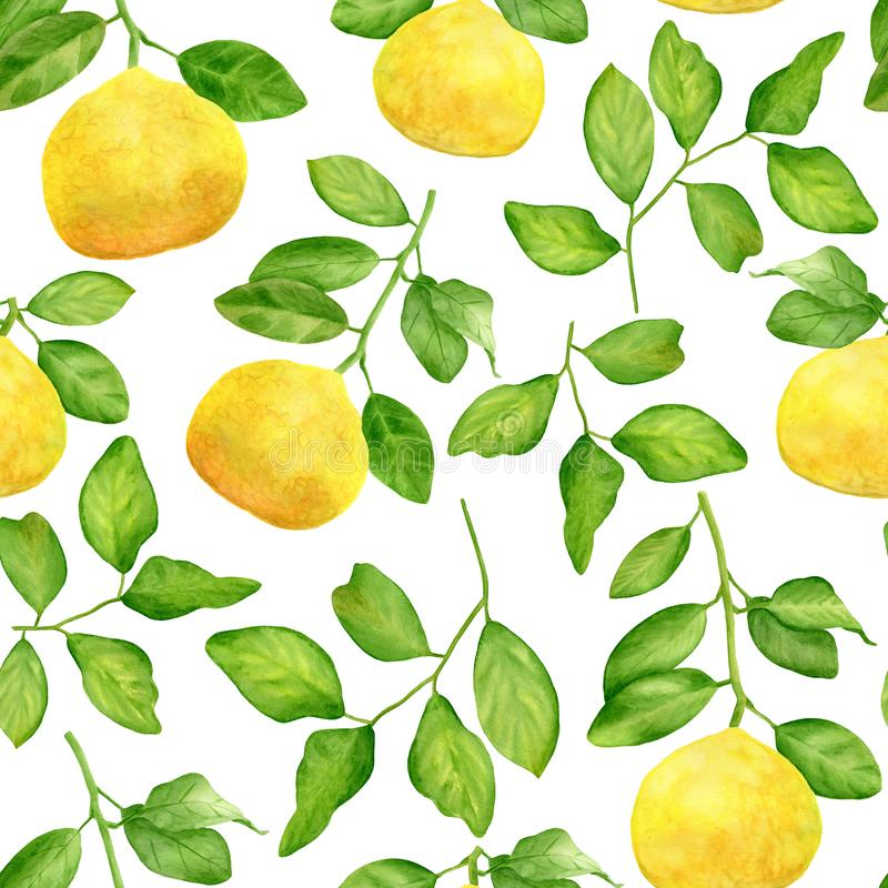 Watercolor yellow lemon branch and leaves seamless pattern. Hand drawn citrus plants isolated on white background stock image