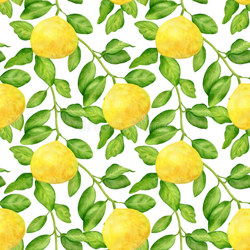 Watercolor yellow lemon branch and leaves seamless pattern. Hand drawn citrus plants isolated on white background stock photos