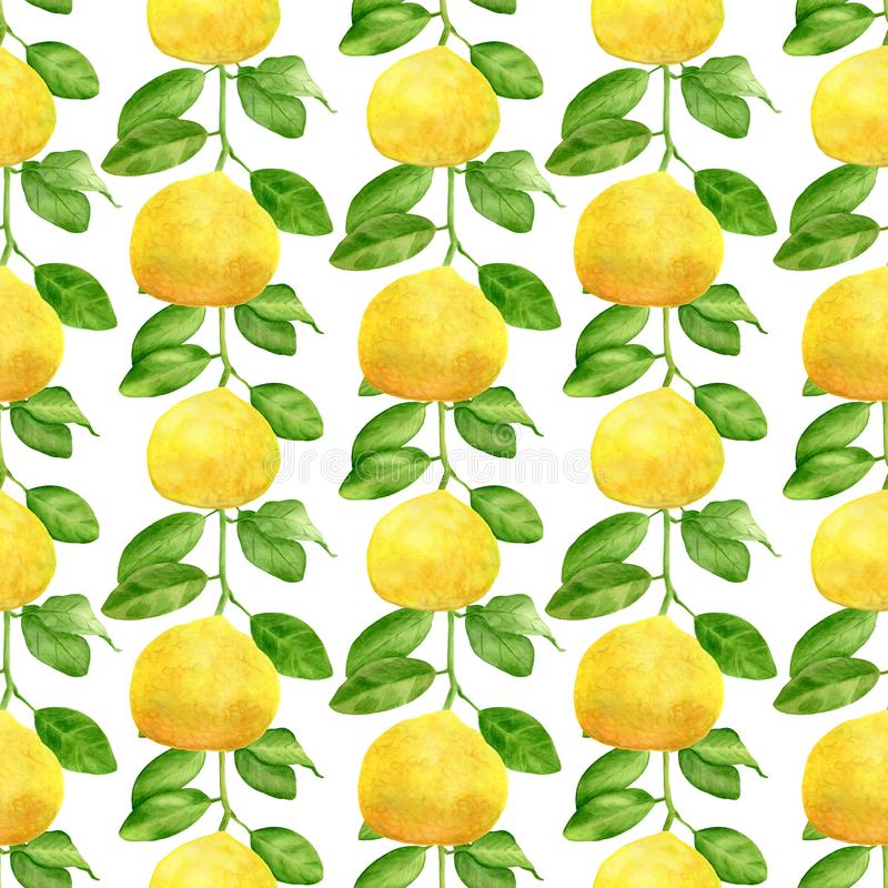 Watercolor yellow lemon branch and leaves seamless pattern. Hand drawn plants isolated on white background. Botanical stock photos