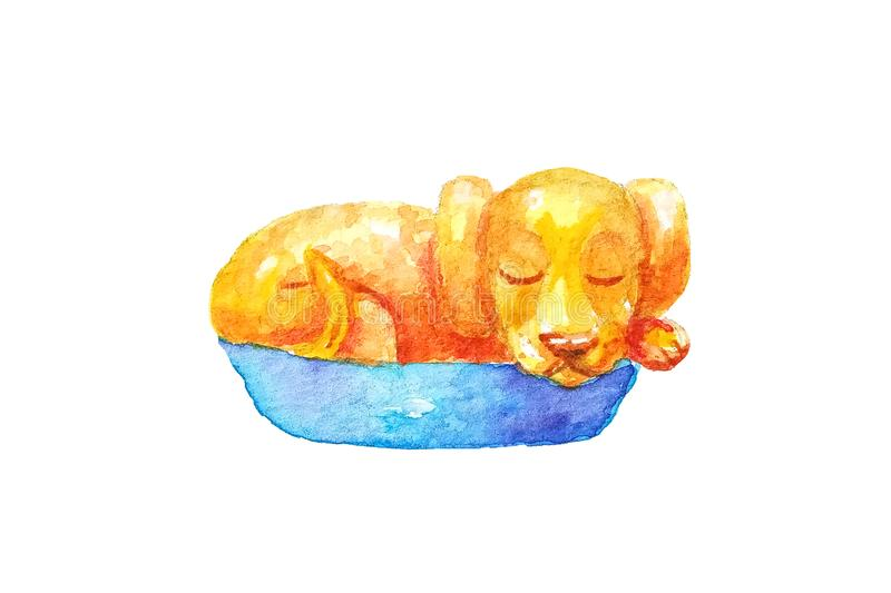 Watercolor yellow little puppy sleeping in a basket on a white background. Isolated vector illustration