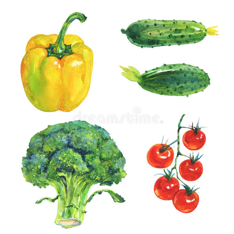 Watercolor yellow paprika pepper, broccoli, cucumbers, cherry tomatoes vector illustration